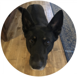 Puppins - Web Intelligence Training Helper